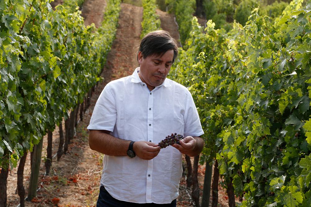 En este momento estás viendo Chile en tres uvas: encuentro con Marcelo García