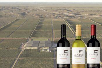 Tres vinos Ventus: descorchar la Patagonia