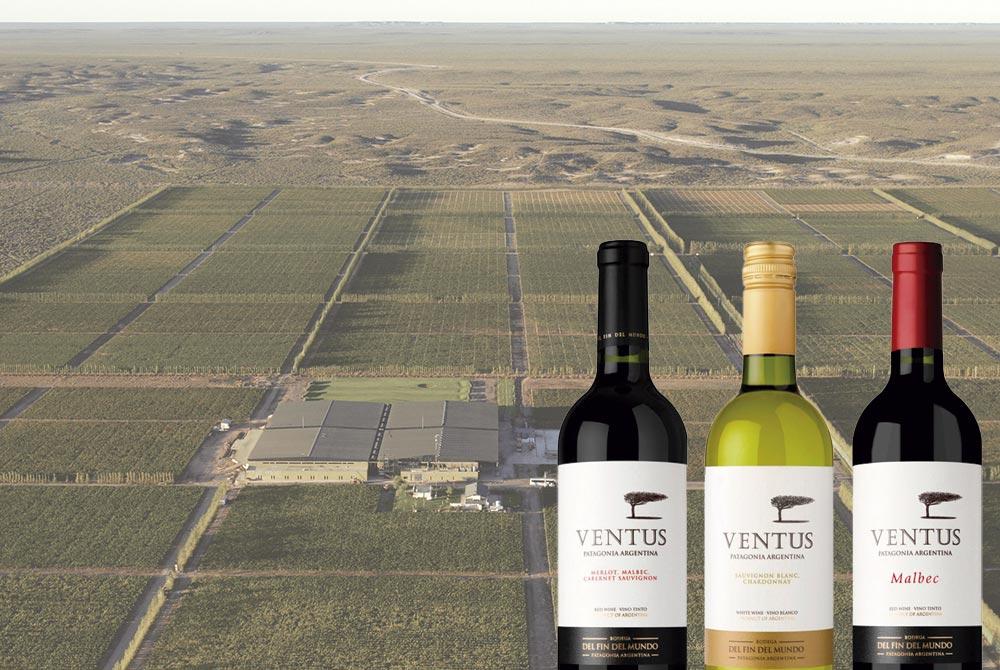 En este momento estás viendo Tres vinos Ventus: descorchar la Patagonia